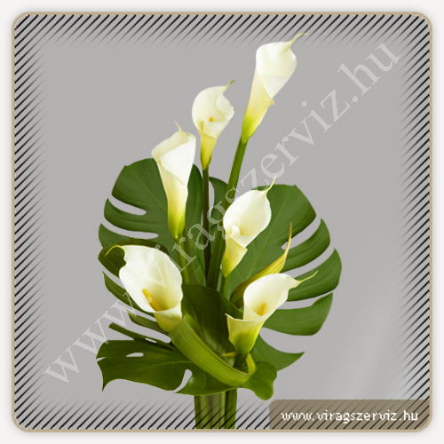 Funeral Bouqet - White Calla with Monstera leaf