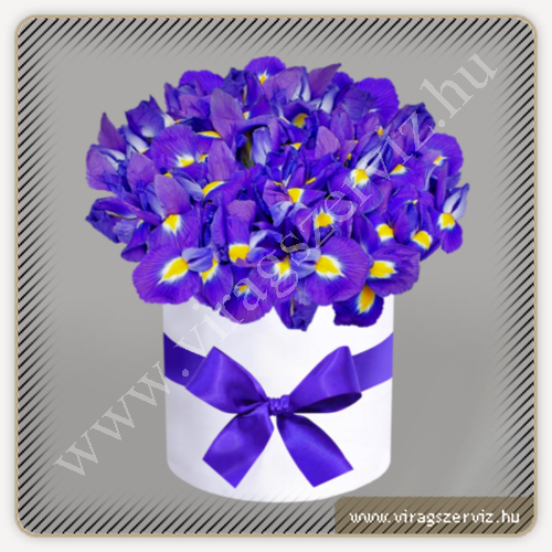 Purple iris - Box
